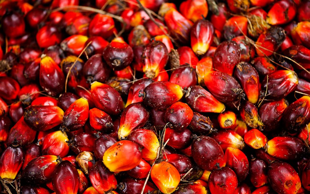 Responsibly Grown Palm Oil